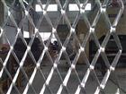 菱形孔建筑用钢板防护网