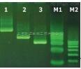 柱式动物线粒体DNAout,PCR级