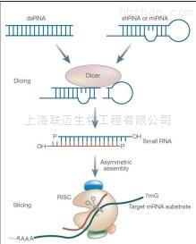 miRNA PAGE胶回收试剂盒