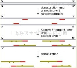 随机引物法DNA探针标记试剂盒