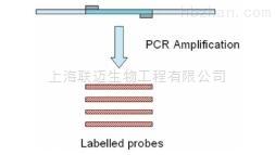 PCR法DNA探针标记试剂盒