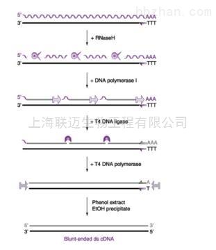 cDNA第二链合成试剂盒