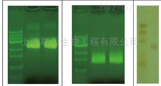 T7体外转录试剂盒