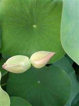 园艺水培植物塑料营养杯 无孔育苗杯