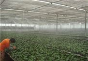 蔬菜大棚雾化加湿设备