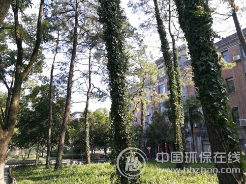 种树为生态筑起绿色屏障 植树节还可以这么做
