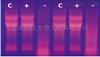 非冻型组织RNA保存液